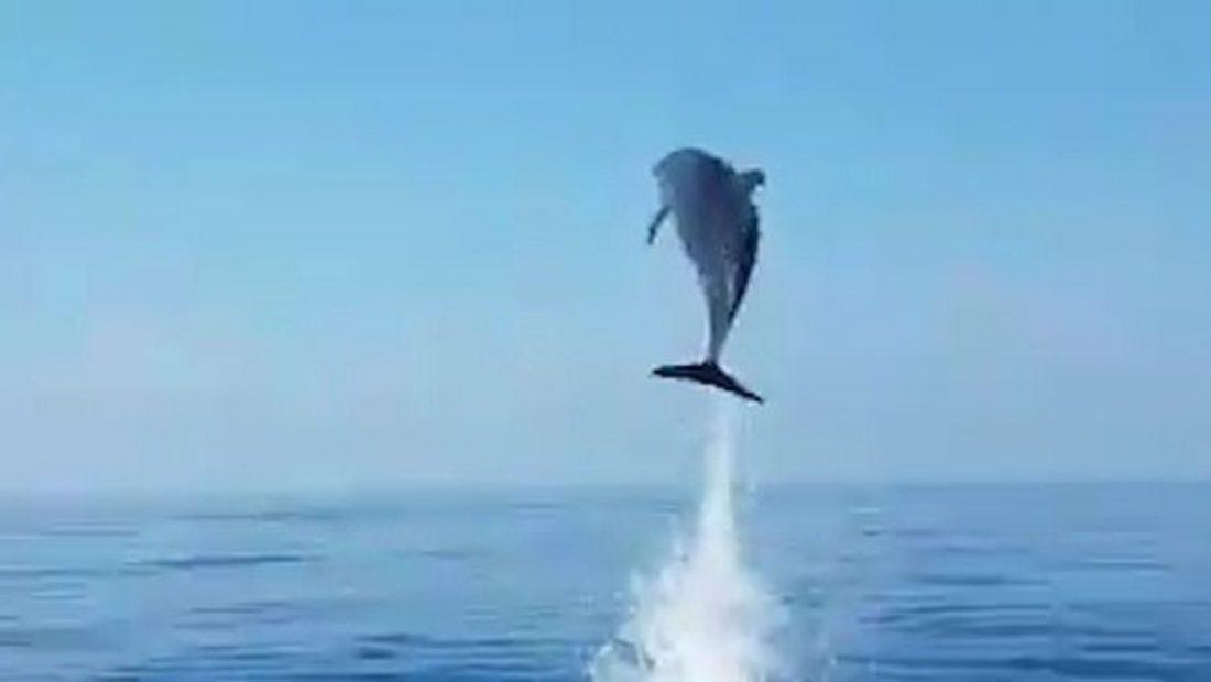 delfiniiii 1100x620