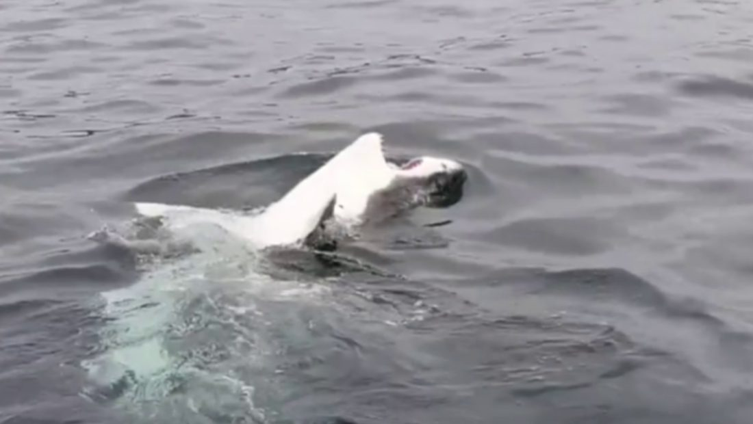 peshkaqeni 1100x620