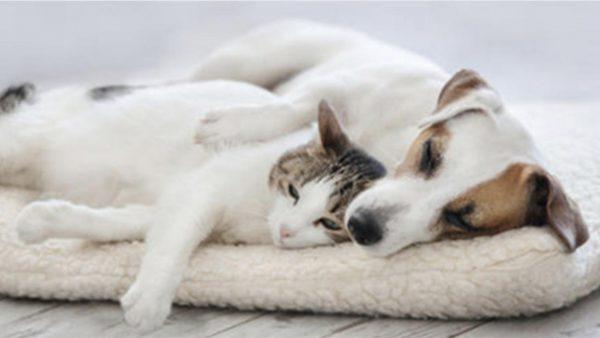 Studimi i ri: Covid-i më se i zakonshëm te kafshët shtëpiake