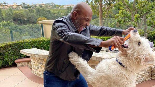 Gati rikthimi në ring, 53-vjeçari Tyson: Jam më në formë se kurrë