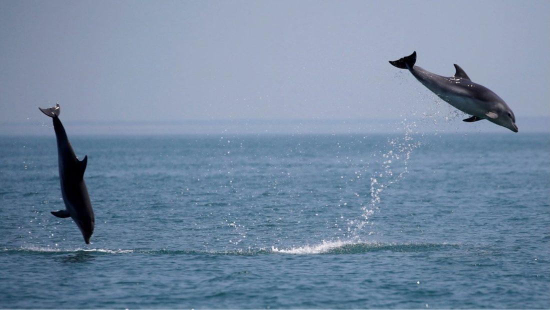 delfinet 1100x620