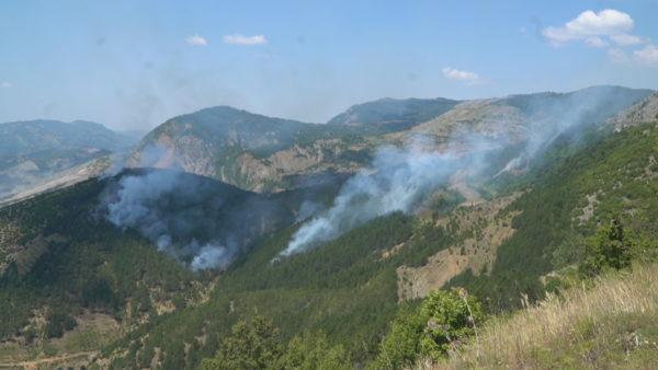 Zjarri djeg bimësinë dhe pyjet me pisha në Elbasan