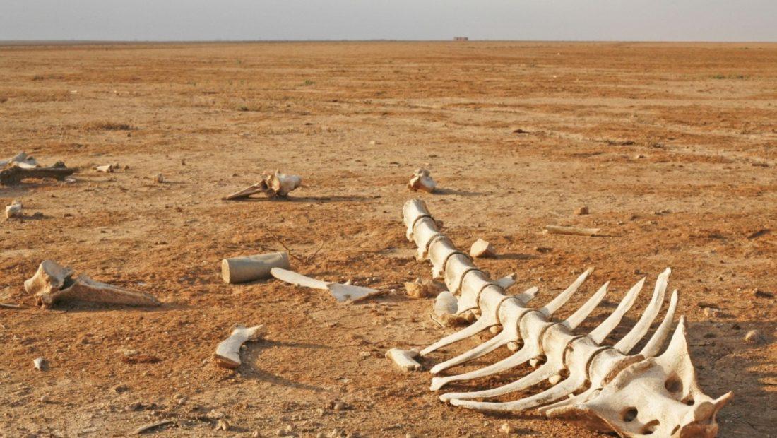 skelet 1100x620