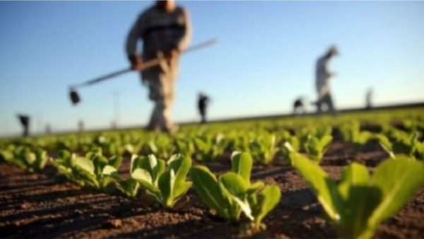 """Shqipëria ka më shumë """"fermerë"""" sesa Greqia dhe Serbia"""