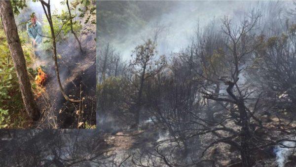Zjarr në pyjet e Pogradecit, shuhet me mjete rrethanore