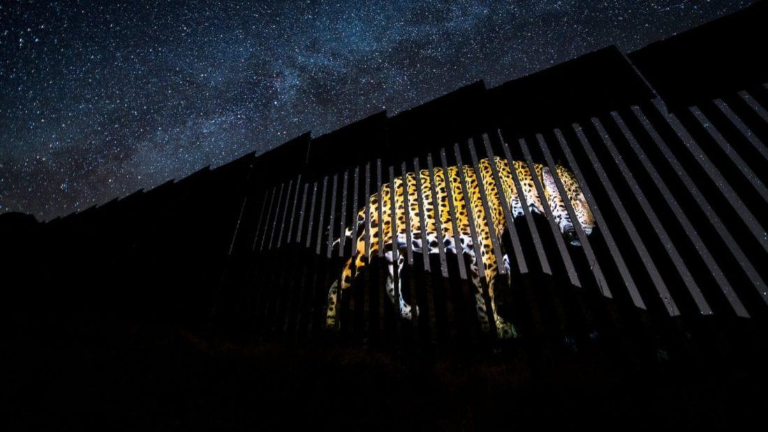 jaguari meksike shba 1100x620
