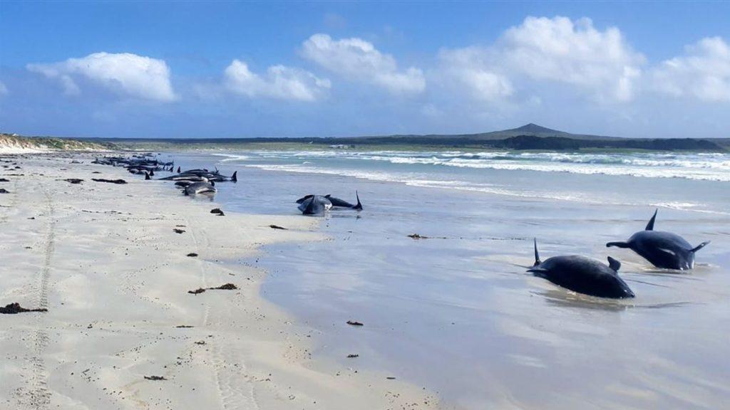 Ishujt ku balenat gjejnë fundin e tyre