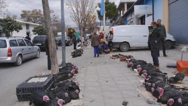 Elbasan, gjeli i detit më i lirë, por më pak i shitur nga kriza e pandemisë