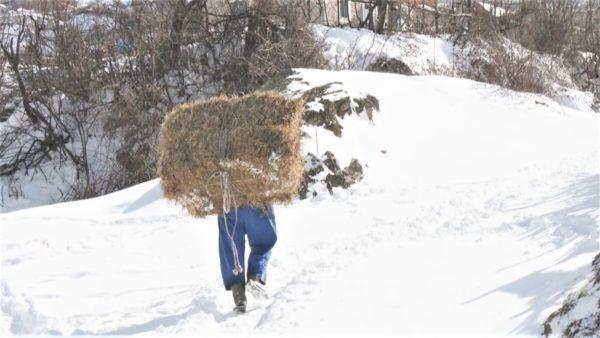 Pas reshjeve të dëborës, jetë e vështirë për banorët e fshatrave të Kukësit