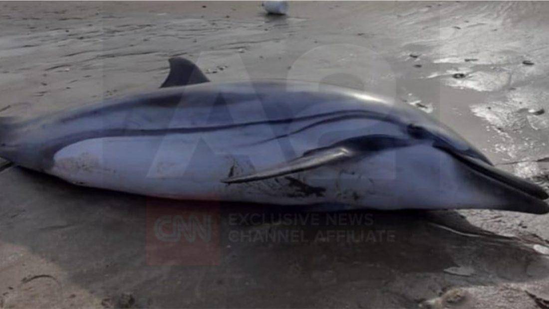 delfini durres 1100x620