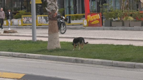 Panik nga qentë në Vlorë, sulmohet dhe kafshohet një grua në Lungomare