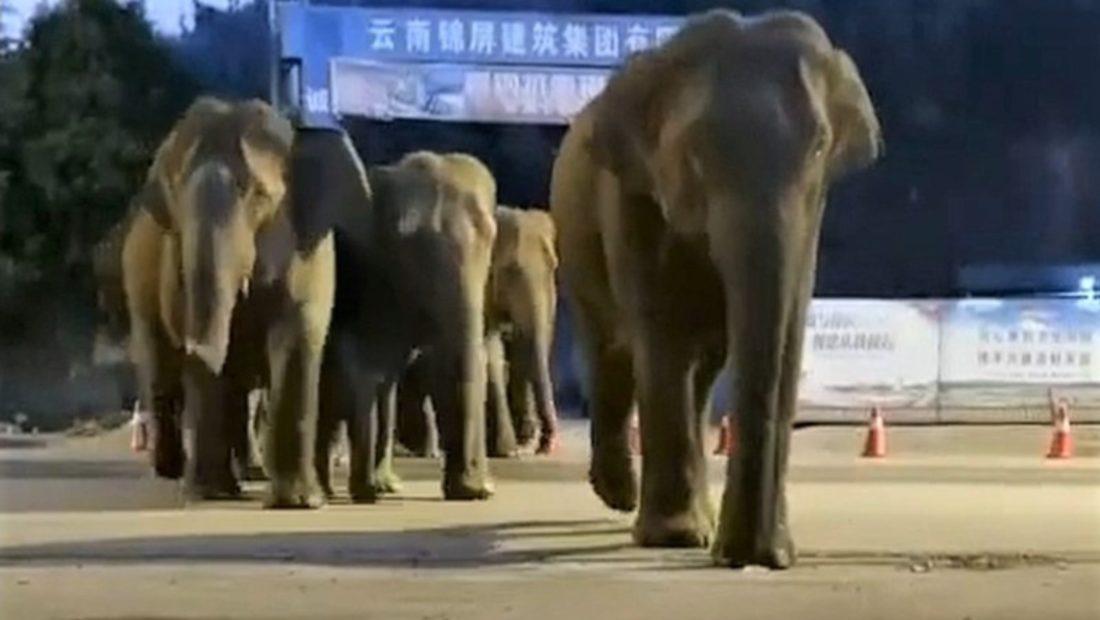 Elefantet 1100x620