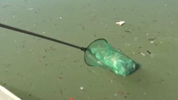 Ndotet Fierza, liqeni kthehet në grumbullues mbeturinash