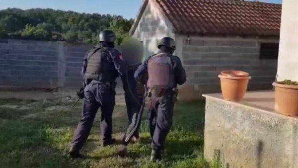 Detaje të reja nga aksioni antikanabis me 16 të arrestuar