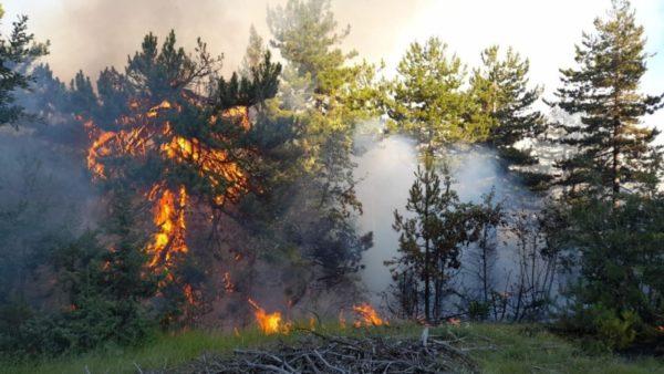 Vijojnë zjarret në Vithkuq, prej 24 orësh digjen pisha dhe shkurre