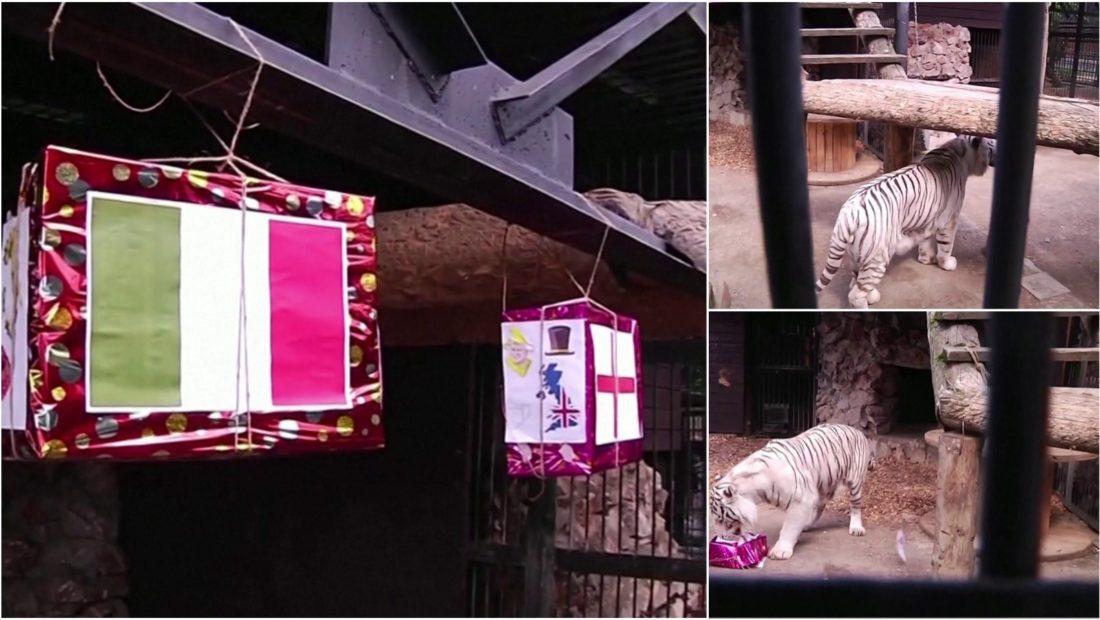 tigri siberian 1100x620