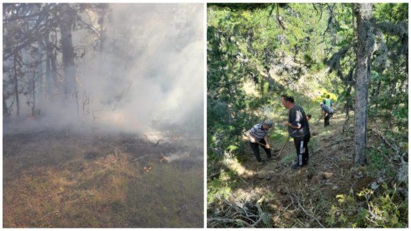 Zjarr në Korçë, digjen më shumë se 1 hektar me pisha, zjarrfikëset nuk mund të ndërhyjnë