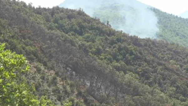 Zjarret në pyje, AKM: Në harkun kohor 2017-2019 u prekën 2 135 hektarë sipërfaqe