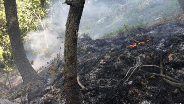 Akuzohet se u vuri zjarrin malit të Gjallicës, arrestohet 47-vjeçari, sekuestrohet kallashnikovi