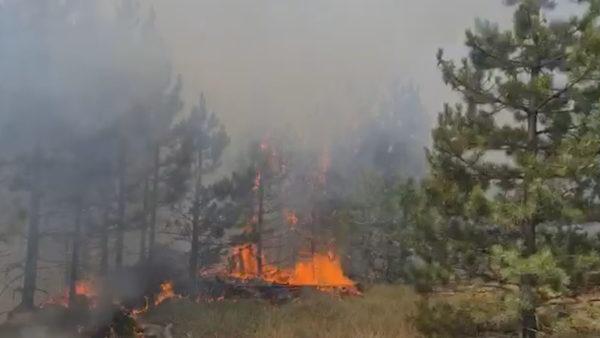 Zjarret në juglindje: Në flakë prej dy ditësh pyjet me dushk në Rrajcë