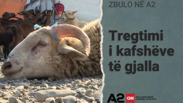 Kushtet e tregtimit të kafshëve në Shqipëri