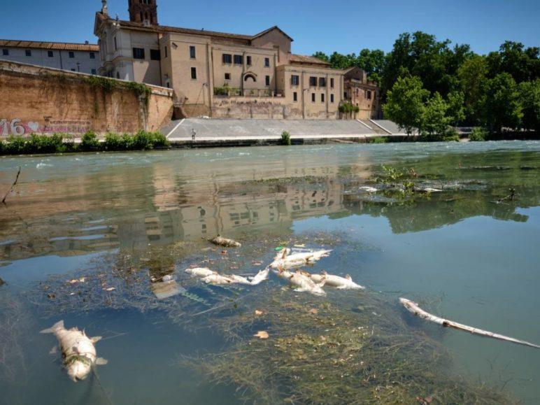 Mister në qendrën e Romës, lumi mbushet me mijëra peshq të ngordhur