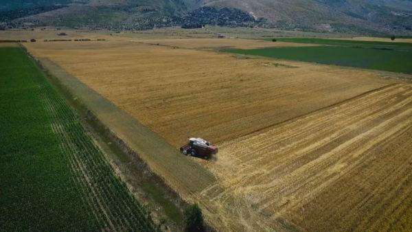 """""""Beteja"""" për bukën, sasi të pamjaftueshme gruri përballë tokave të mbetura djerrë"""