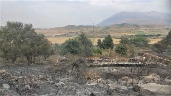 Zjarret dëmtuan bujqësinë, flakët shkrumbuan pemë dhe të mbjella