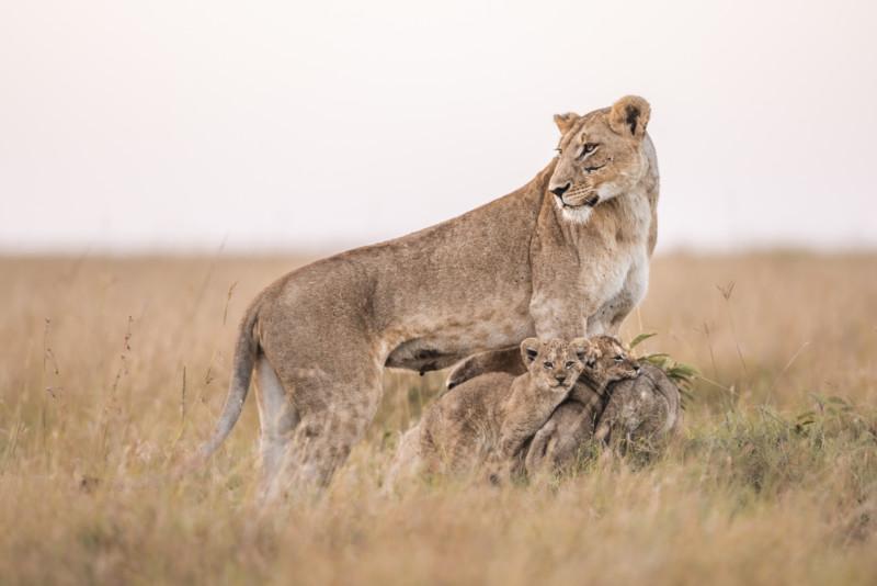 Bota e egër në Kenia, fotografi fikson imazhet e mrekullueshme gjatë izolimit global