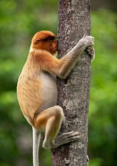 Majmuni duke puthur pemën dhe tigri druvar, fotot më komike të kafshëve