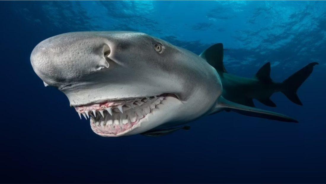 peshkaqeni duke qeshur 1100x620