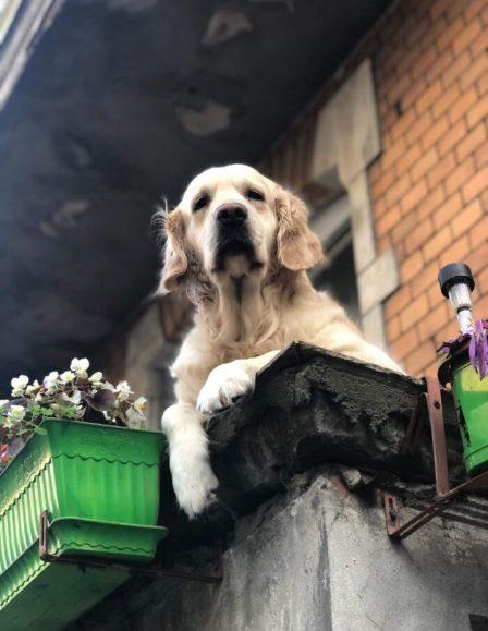 Qeni në ballkon, atraksioni i veçantë i qytetit