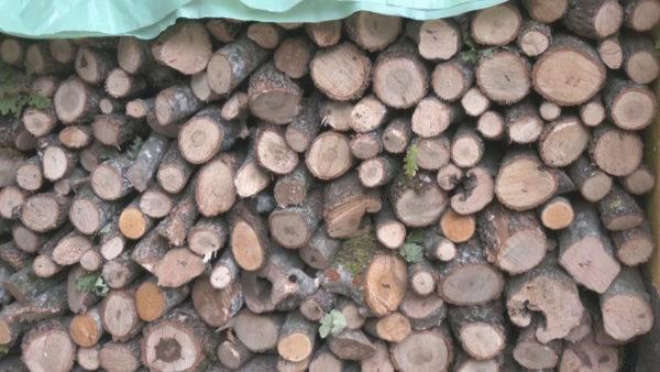 Çmim i lartë për lëndën drusore: Kuksianët në hall për të siguruar ngrohjen