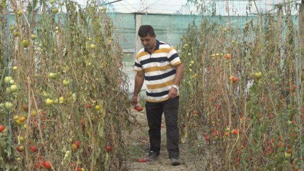 """""""Të martën protestë"""", fermerët nuk e pranojnë raportin e MBZHR: Fajin e kanë farërat"""
