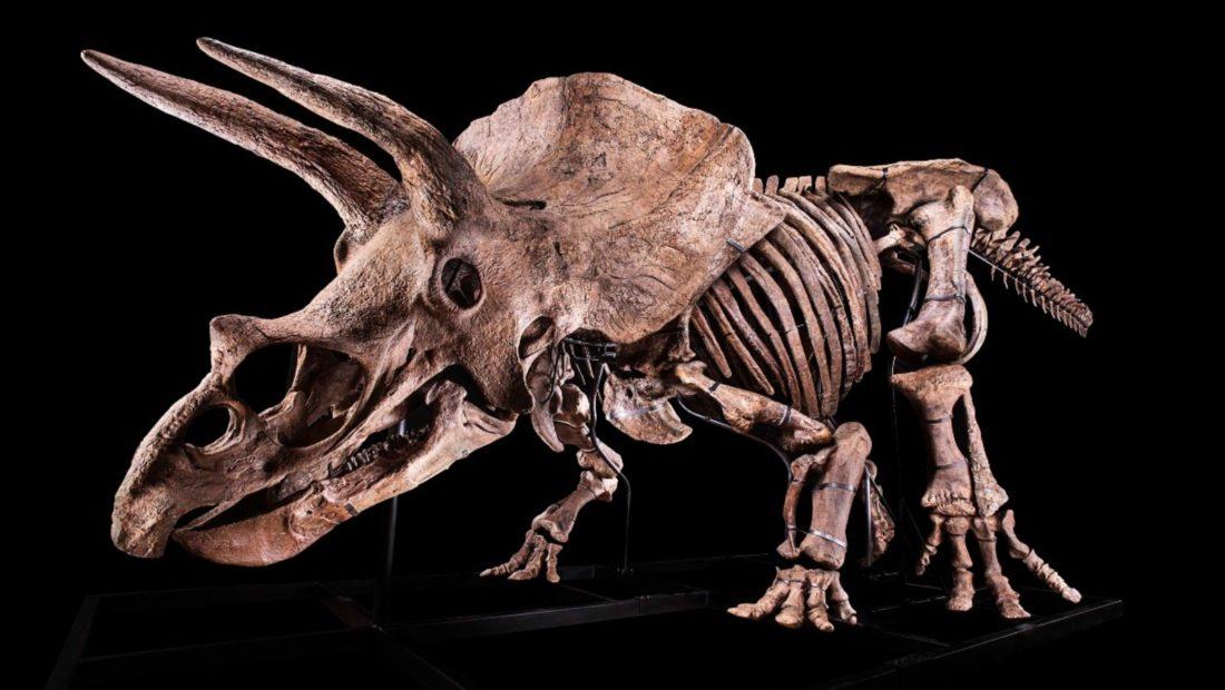 Skeleti i dinozaurit 66 milione vjecar shitet per nje shifer rekord ne ankand 1100x620