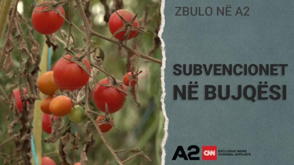 Subvencionimi me pikatore për fermerët shqiptarë!